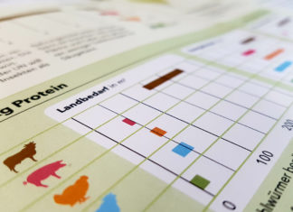 Blick in den Factsheet Insekten als Lebensmittel